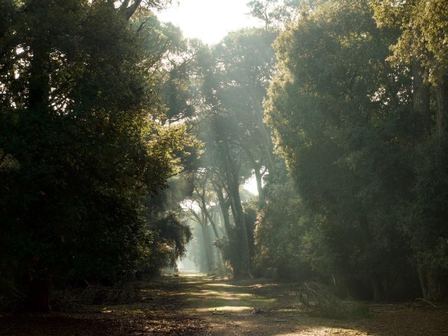 alberi caravella